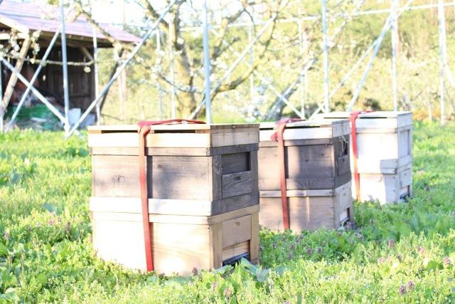 さくらんぼ ハチの巣箱
