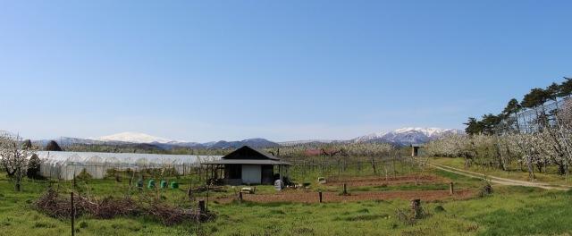 風光明媚 さがえ屋契約農家阿部さんのさくらんぼ畑