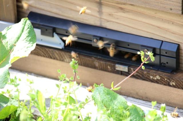 ハチの羽音がブンブンと響き渡る